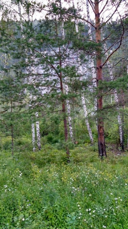 Καλοκαίρι Forrest στοκ εικόνες με δικαίωμα ελεύθερης χρήσης