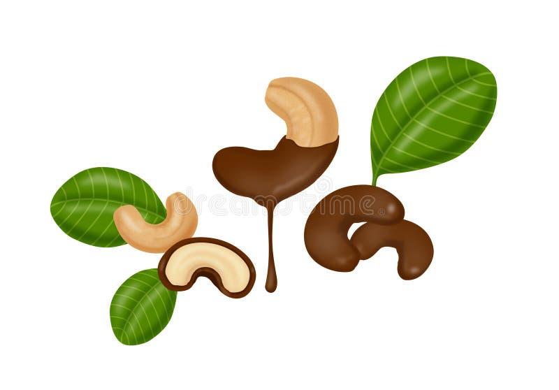 Καλυμμένα σοκολάτα καρύδια των δυτικών ανακαρδίων διανυσματική απεικόνιση