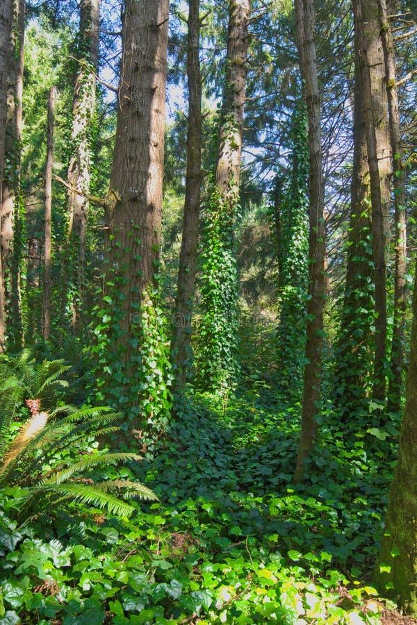 Καλυμμένο άμπελος δάσος στοκ εικόνες με δικαίωμα ελεύθερης χρήσης