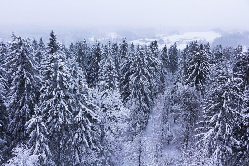 καλυμμένο δασικό χιόνι στοκ εικόνα με δικαίωμα ελεύθερης χρήσης