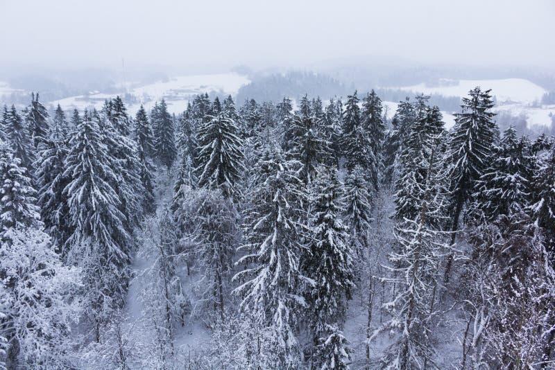 καλυμμένο δασικό χιόνι στοκ φωτογραφία με δικαίωμα ελεύθερης χρήσης