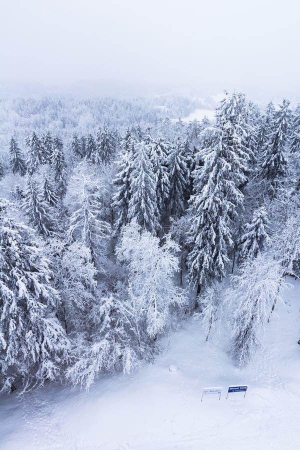 καλυμμένο δασικό χιόνι στοκ εικόνες με δικαίωμα ελεύθερης χρήσης