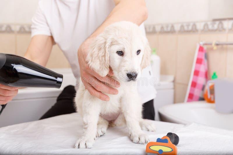 Καλλωπισμός ατόμων του σκυλιού του στο σπίτι στοκ φωτογραφίες