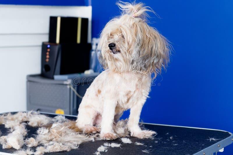 καλλωπισμός σκυλιών στοκ φωτογραφία με δικαίωμα ελεύθερης χρήσης