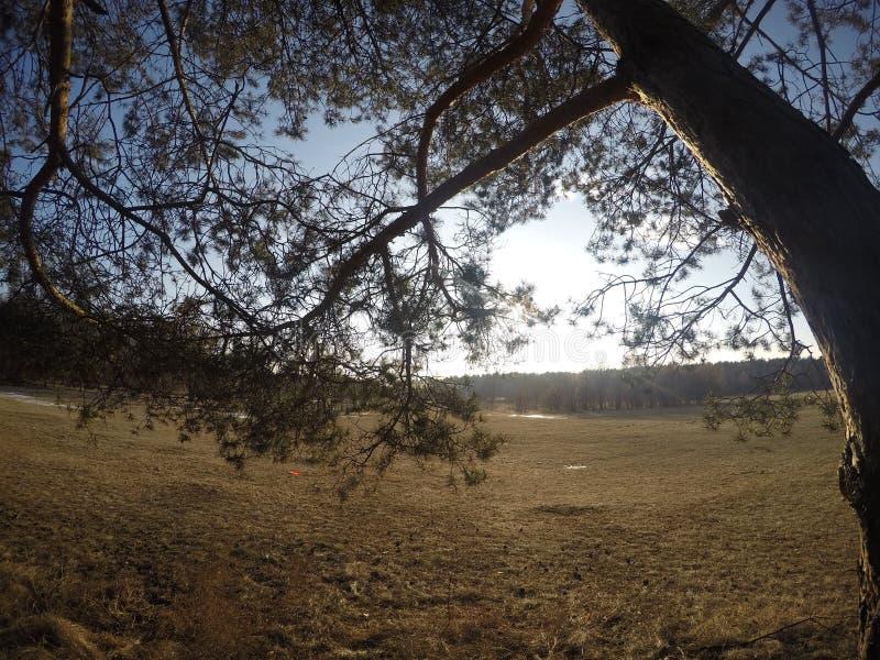 καλό δέντρο στοκ εικόνα