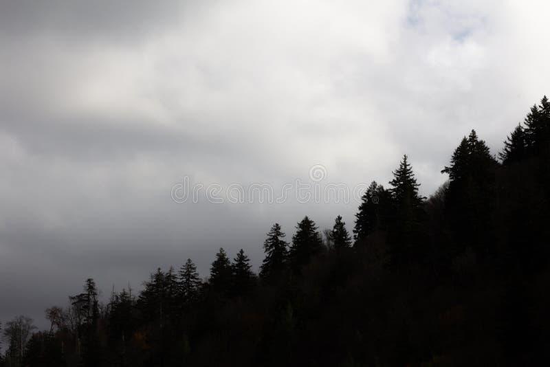 Κεκλιμένο treeline στη σκιαγραφία ενάντια σε έναν νεφελώδη ουρανό, μεγάλα καπνώδη βουνά στοκ φωτογραφία