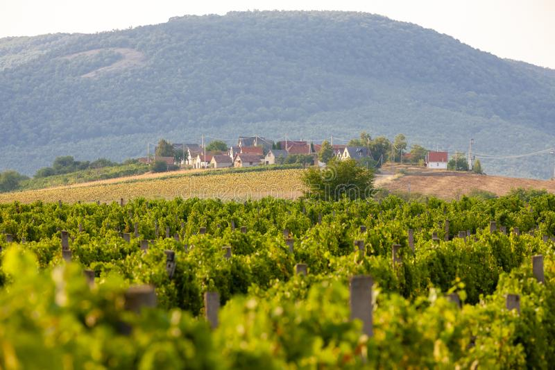 κελάρια κρασιού σε Bukkzserc, Ουγγαρία στοκ φωτογραφία