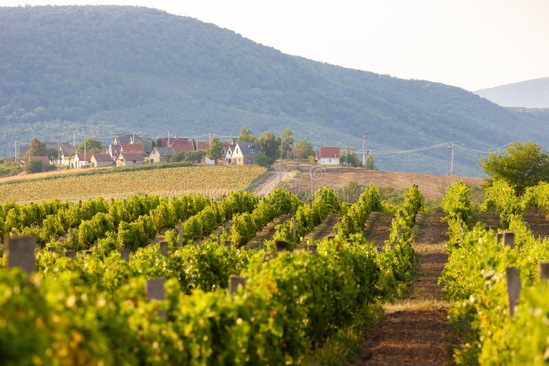 κελάρια κρασιού σε Bukkzserc, Ουγγαρία στοκ φωτογραφίες