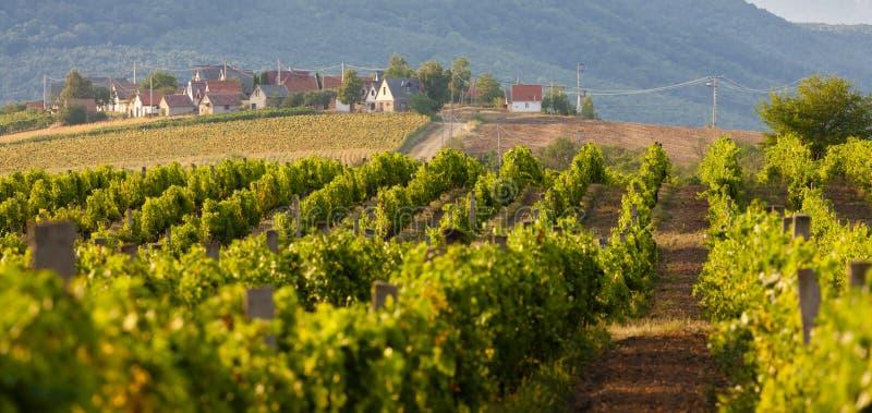 κελάρια κρασιού, Bukkzserc, Ουγγαρία στοκ φωτογραφία