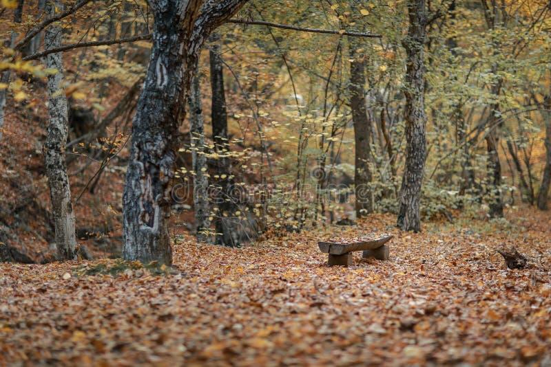 Κενές ξύλινες στάσεις πάγκων στο πάρκο φθινοπώρου στοκ φωτογραφία