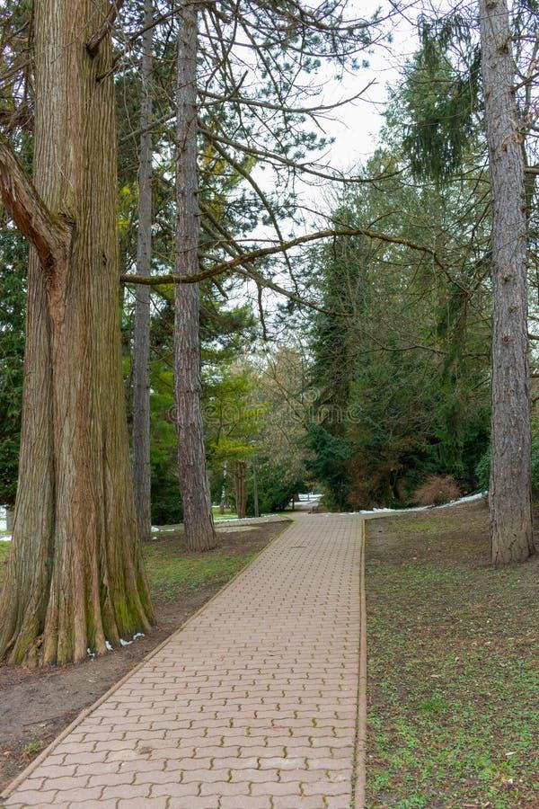 Κενή πορεία στο όμορφο πάρκο Τοπίο κήπων Υπόβαθρο πάρκων άνοιξη Κενές πάροδος και λεωφόρος μεταξύ των δέντρων και των ξύλων στοκ εικόνα