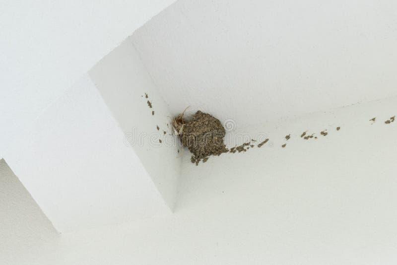 Κενή φωλιά πουλιού κατάποσης στη νέα πρόσοψη του λευκού οίκου στοκ φωτογραφία με δικαίωμα ελεύθερης χρήσης