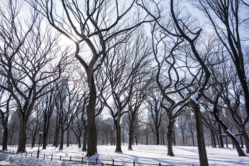 κεντρικά δέντρα πάρκων στοκ εικόνα