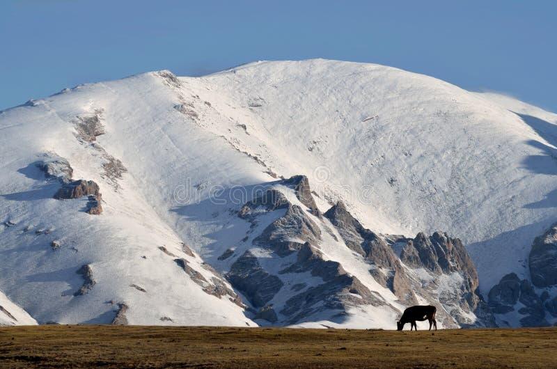 Κεντρικές αιχμές βουνών Tian Shan που καλύπτονται με το χιόνι κοντά στη λίμνη γιος-Kul, το Κιργιστάν, την κεντρική Ασία, τη δημοφ στοκ φωτογραφίες με δικαίωμα ελεύθερης χρήσης