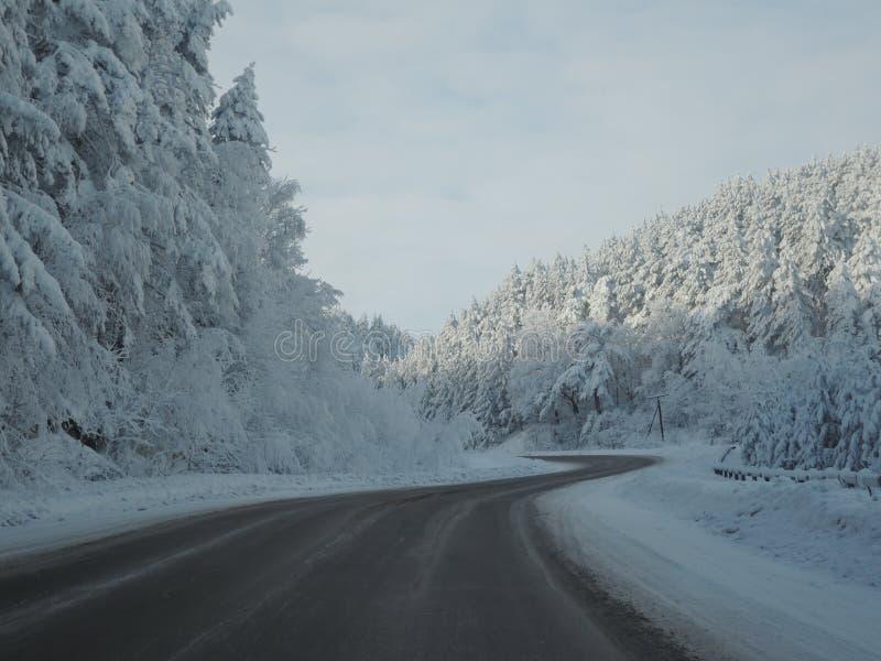 Κενός δρόμος στο δάσος στις Άλπεις τον όμορφο χιονώδη χειμώνα στοκ φωτογραφία με δικαίωμα ελεύθερης χρήσης