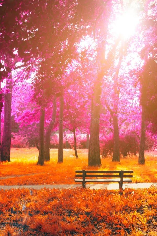 Κενός πάγκος στο πάρκο, στη ροδανιλίνη φθινοπώρου φαντασίας και το πορτοκάλι ομο στοκ φωτογραφία