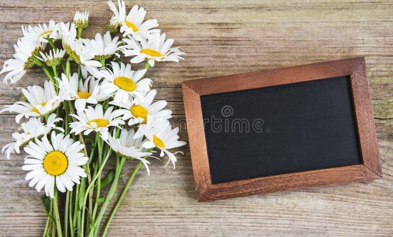 Κενός πίνακας με τα chamomile λουλούδια στοκ φωτογραφίες