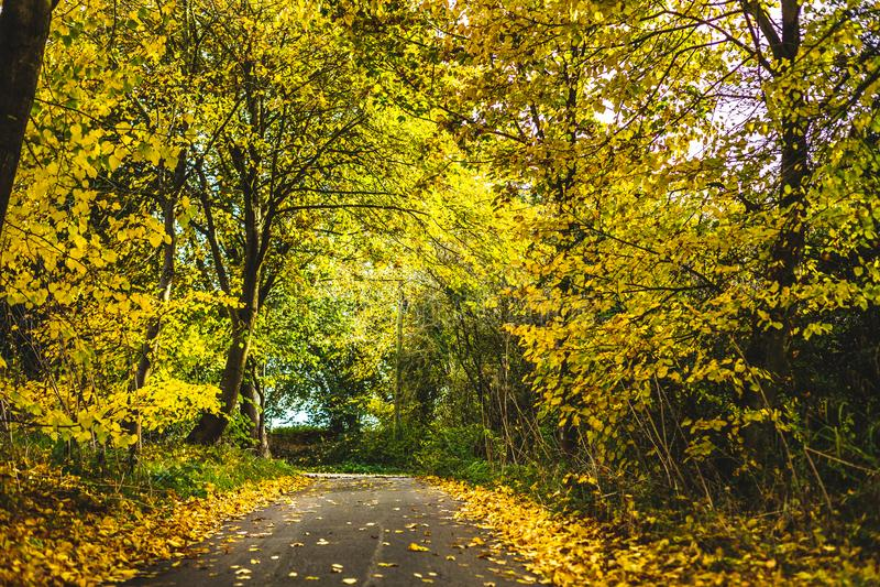 Κενό οδόστρωμα μεταξύ των φθινοπωρινών δέντρων στοκ φωτογραφία με δικαίωμα ελεύθερης χρήσης