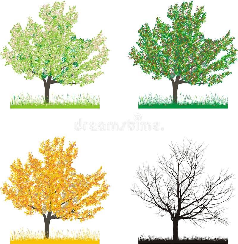 κεράσι δέντρο τεσσάρων επ&om διανυσματική απεικόνιση