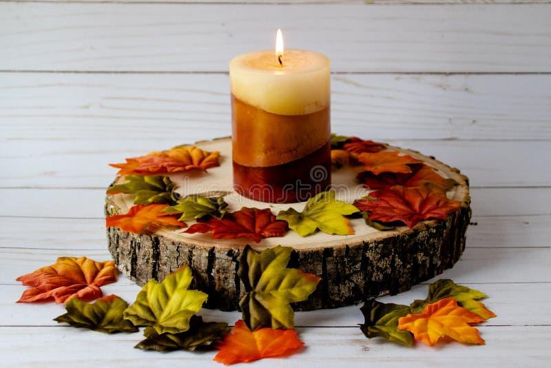 Κερί πτώσης σε μια ξύλινη πλάκα δέντρων που περιβάλλεται από τα φύλλα στοκ εικόνα με δικαίωμα ελεύθερης χρήσης