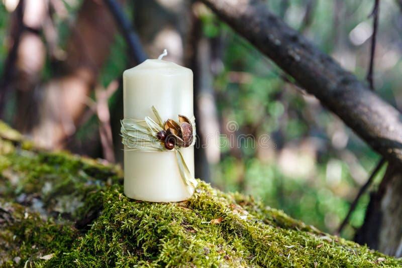 Κερί σε μια σύνδεση το δάσος στοκ εικόνες
