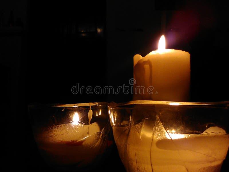 Κερί armony στοκ εικόνες