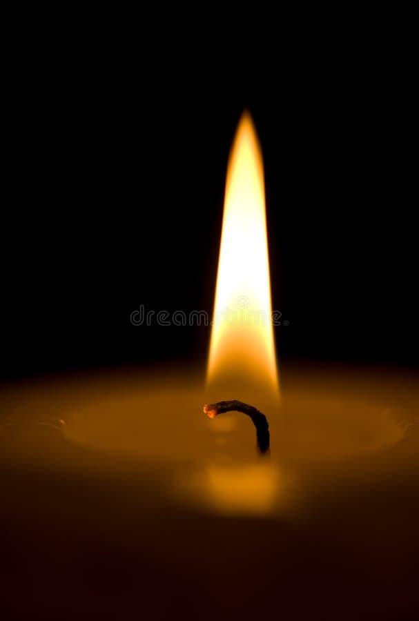 Κερί. Makro. στοκ εικόνες με δικαίωμα ελεύθερης χρήσης