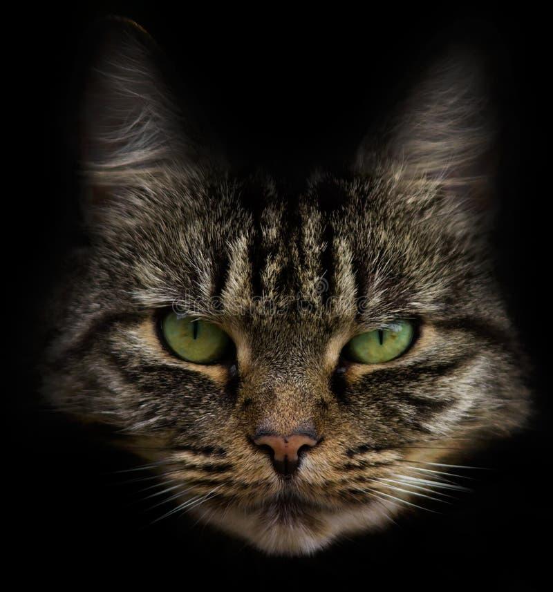 Κεφάλι γατών   στοκ φωτογραφία με δικαίωμα ελεύθερης χρήσης