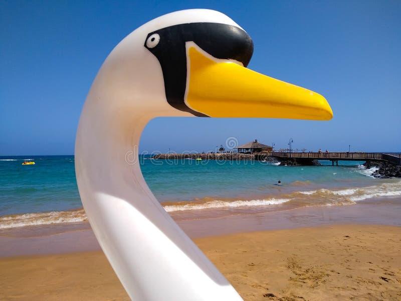 κεφάλι κύκνων μιας επιπλέουσας βάρκας στην ακτή μιας παραλίας έτοιμης να μισθωθεί από τους τουρίστες για την απόλαυση των διακοπώ στοκ εικόνα με δικαίωμα ελεύθερης χρήσης