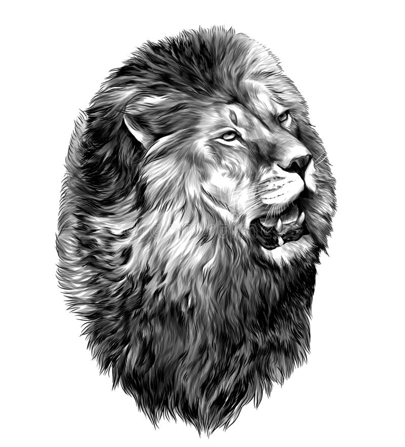 Κεφάλι λιονταριών με το ανοικτό στόμα που κοιτάζει στην πλευρά απεικόνιση αποθεμάτων