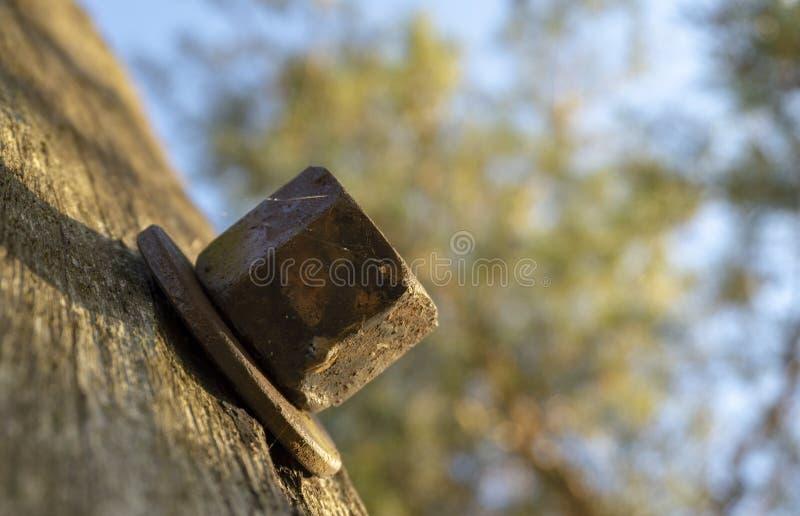 Κεφάλι μπουλονιών με το πλυντήριο στην ξύλινη επιφάνεια στοκ εικόνα με δικαίωμα ελεύθερης χρήσης