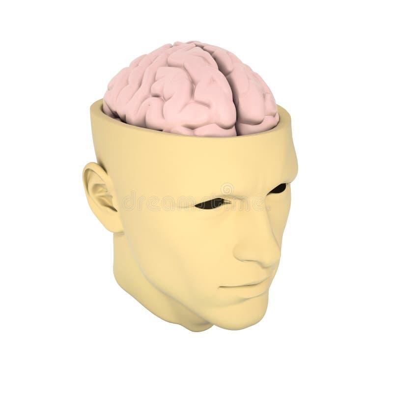 Κεφάλι με τον ορατό εγκέφαλο στοκ εικόνα με δικαίωμα ελεύθερης χρήσης