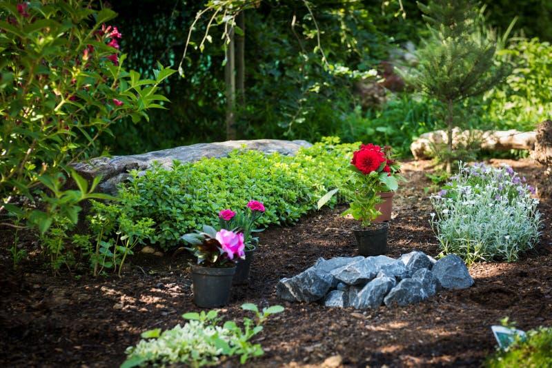 Κηπουρική Πανέμορφες εγκαταστάσεις έτοιμες για τη φύτευση στον ηλιόλουστο κήπο Έννοια εργασιών κήπων άνοιξη εξωραϊσμός κήπων στοκ εικόνες