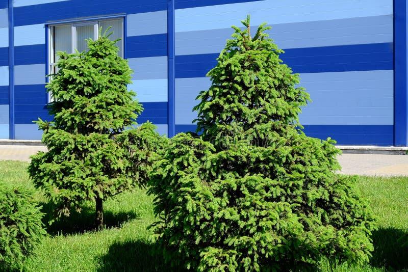 Κηπουρική τοπίων, κυπαρίσσι, νάνο έλατο στοκ εικόνες με δικαίωμα ελεύθερης χρήσης