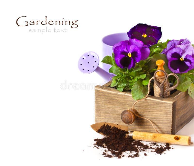 Κηπουρική. στοκ εικόνα