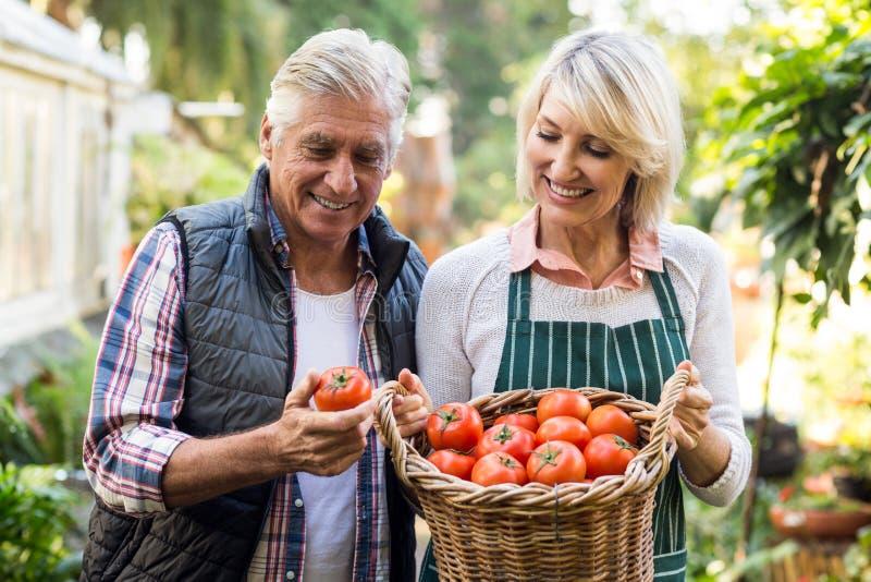 Κηπουροί που φέρνουν το καλάθι ντοματών στοκ εικόνες