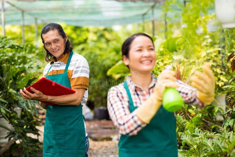 Κηπουροί στο θερμοκήπιο πορτοκαλιών στοκ εικόνα με δικαίωμα ελεύθερης χρήσης