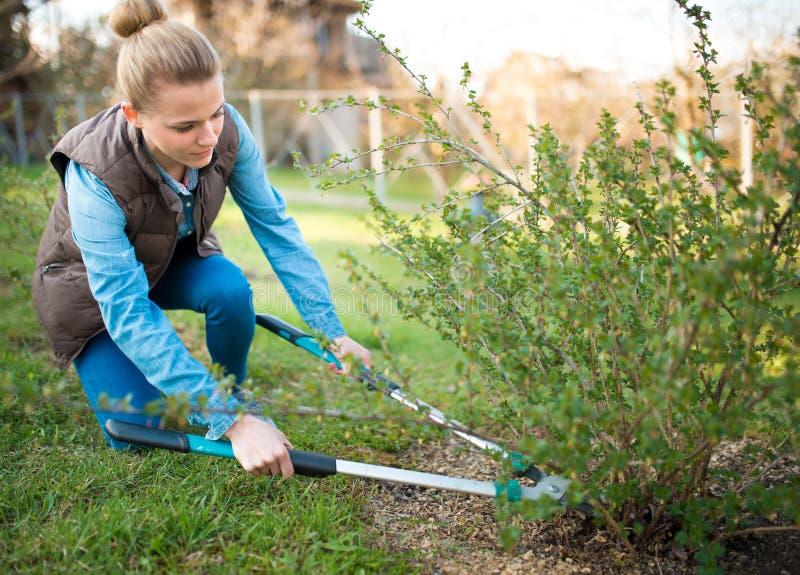 Κηπουρός γυναικών που απασχολείται την άνοιξη στον κήπο και που τακτοποιεί branche στοκ εικόνες