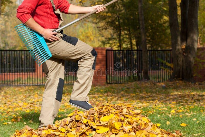 Κηπουρός που έχει τη διασκέδαση κατά τη διάρκεια του φθινοπωρινού χρόνου στοκ εικόνες