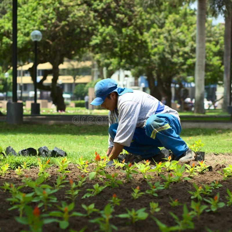 Κηπουρός σε Miraflores, Λίμα, Περού στοκ φωτογραφίες