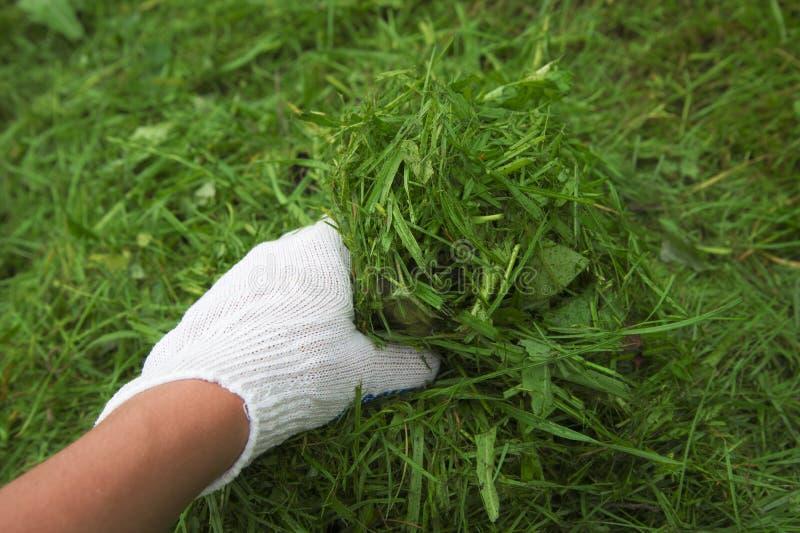 Κηπουρός χεριών στοκ φωτογραφίες με δικαίωμα ελεύθερης χρήσης