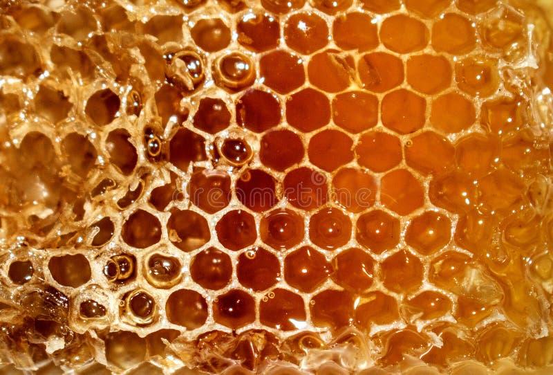 Κηρήθρα από την οποία το μέλι ρέει στοκ φωτογραφία με δικαίωμα ελεύθερης χρήσης