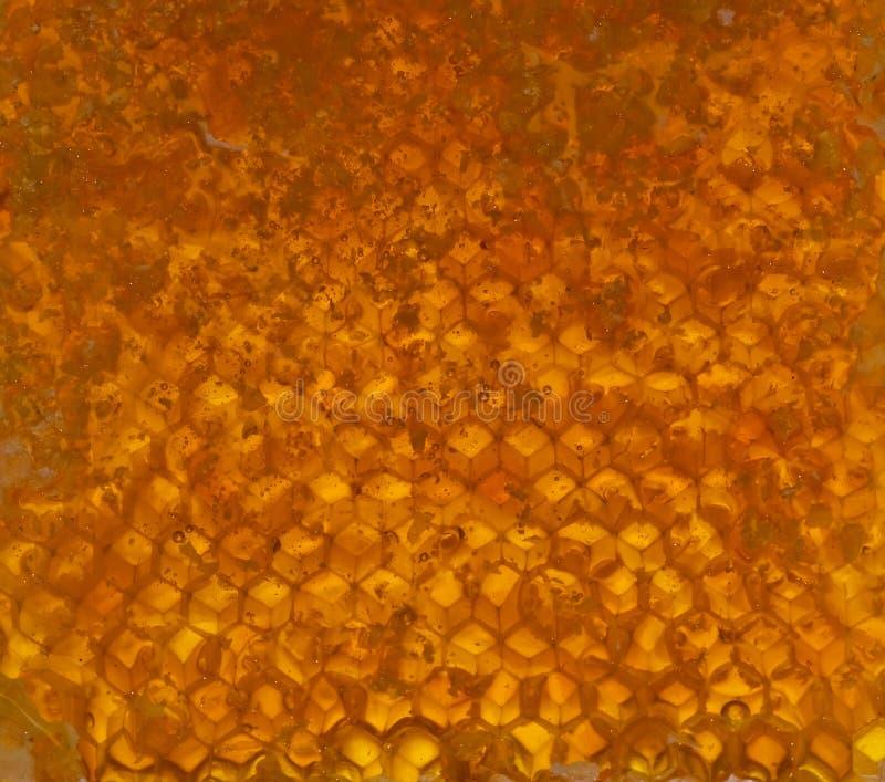 κηρήθρα μελιού στοκ εικόνες
