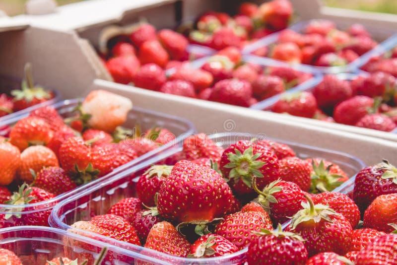 Κιβώτια μερίδας των φρέσκων juicy φραουλών στα πλαστικά κιβώτια στοκ εικόνες με δικαίωμα ελεύθερης χρήσης