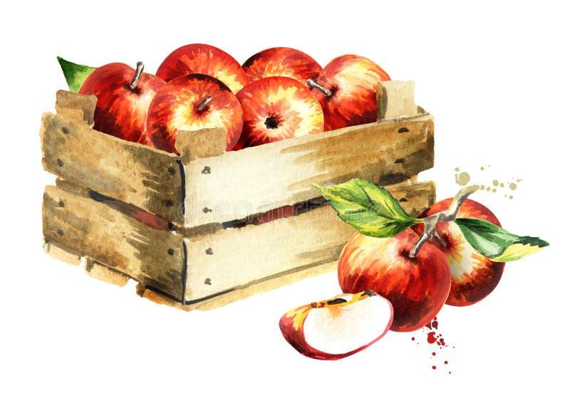 Κιβώτιο με τα μήλα η διακοσμητική εικόνα απεικόνισης πετάγματος ραμφών το κομμάτι εγγράφου της καταπίνει το watercolor στοκ εικόνες