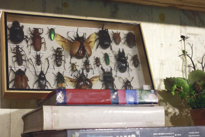 Κιβώτιο της συλλογής εντόμων στοκ εικόνα