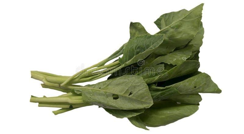 Κινεζικά λαχανικά μπρόκολου που απομονώνονται στο άσπρο υπόβαθρο στοκ φωτογραφίες με δικαίωμα ελεύθερης χρήσης