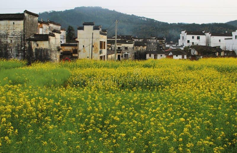 Κινεζικά κτήρια Hui στον κίτρινο τομέα λουλουδιών βιασμών στοκ εικόνες
