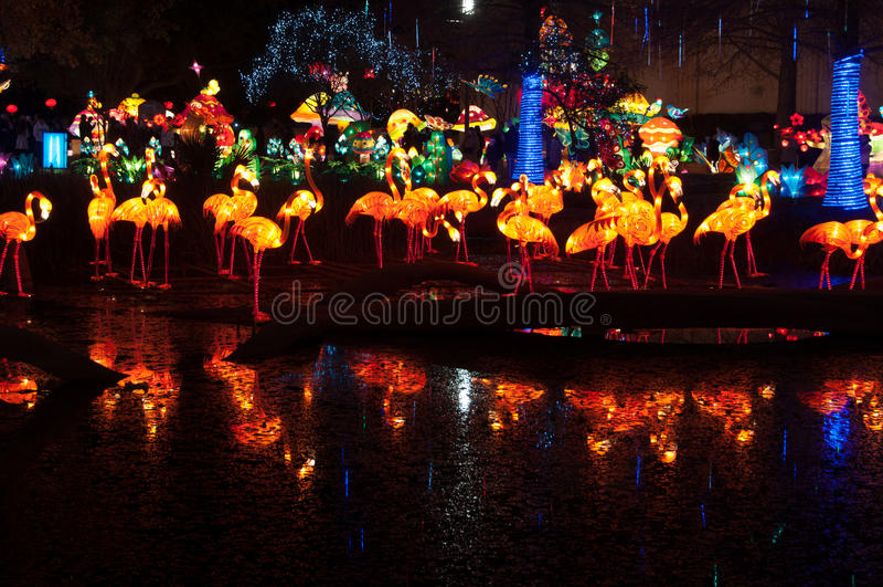 Κινεζικά φανάρια φλαμίγκο που απεικονίζονται σε μια λίμνη στοκ εικόνες