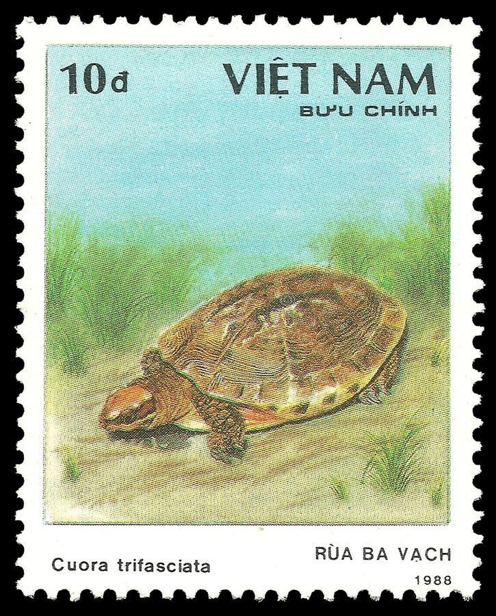 Κινεζική ριγωτή χελώνα πλαισίων τρία στοκ φωτογραφία με δικαίωμα ελεύθερης χρήσης